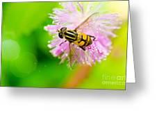 Flower Files On Flower Greeting Card