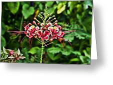 Flower Fireworks Greeting Card
