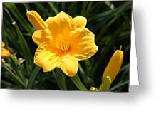 Flower In Bloom  Greeting Card