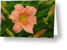 Flower In Pink Greeting Card