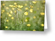 Flower Of A Buttercup In A Sea Of Yellow Flowers Greeting Card