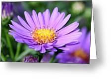 flower of September Greeting Card