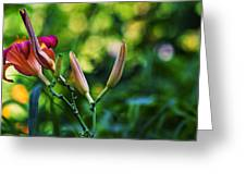 Flower Of Summer Greeting Card