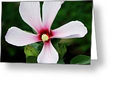 Flower Painting 0007 Greeting Card