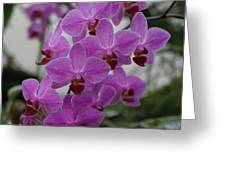 Flower Painting 0009 Greeting Card by Metro DC Photography