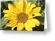 Flower Painting 0010 Greeting Card
