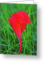 Flower Petal And Grass- St Lucia Greeting Card