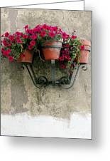 Flower Pots On Old Wall Greeting Card