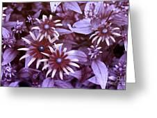 Flower Rudbeckia Fulgida In Uv Light Greeting Card