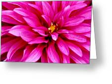 Flower Squared Greeting Card