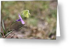 Flower Which Did Sway The Butterfly Flew Away Greeting Card
