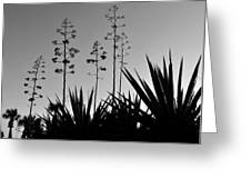 Flowering Agaves Greeting Card