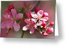 Flowering Crabapple Detail Greeting Card