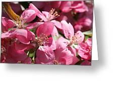 Flowering Crabapple In Bloom Greeting Card by Mark J Seefeldt