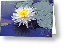 Flowering Lily-pad- St Marks Fl Greeting Card