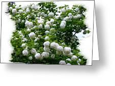 Flowering Snowball Shrub Greeting Card