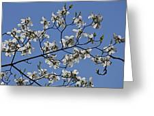 Flowering White Dogwood Greeting Card