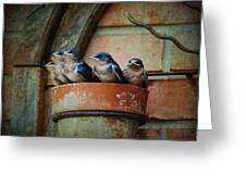 Flowerpot Swallows Greeting Card by Jai Johnson