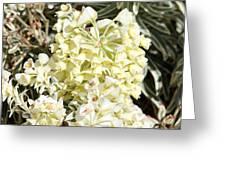 Flowers - 0052 Greeting Card