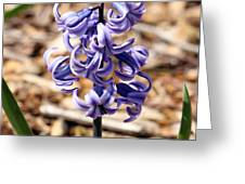 Flowers - 0054 Greeting Card