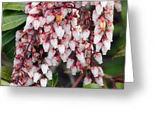 Flowers - 0055 Greeting Card