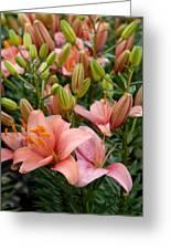 Flowers 385 Greeting Card