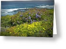 Flowers Along The Shore At La Jolla California No.0203 Greeting Card