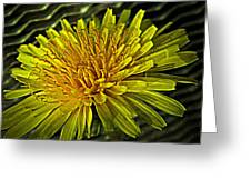 Flowers Are Weeds With Respect Greeting Card