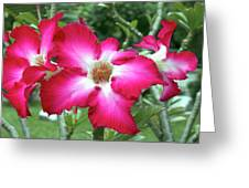 Flowers Bangkok Thailand  Greeting Card