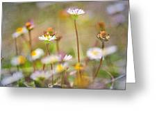 flowers endemic at Sierra Nevada Greeting Card