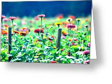 Flowers Everywhere Greeting Card