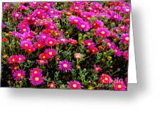 Flowers For Wallpaper Greeting Card