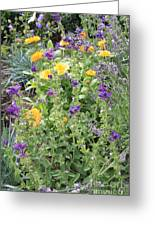 Flowers In Charlottenburg Palace Garden Greeting Card