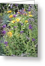 Flowers In Charlottenburg Palace Garden Greeting Card