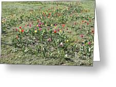 Flowers In Spring Greeting Card