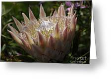 Flowers Of New Zealand 3 Greeting Card