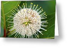 Flowers Of The Forest Series Greeting Card