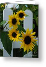 Flowers On A Fence Greeting Card