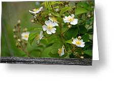 Flowers On The Fence Greeting Card