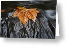 Flowing Leaf Greeting Card
