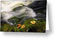 Flowing Stream  Greeting Card