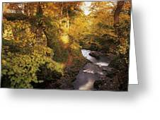 Flowing Water Through A Forest Greeting Card