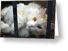 Fluff Kitty Greeting Card