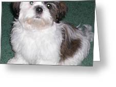 Fluffy Dog Greeting Card by Sherry Hunter
