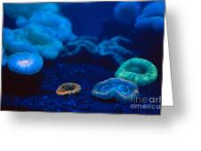 Fluorescent Corals Greeting Card