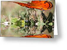 Fluttering Reflections - Butterfly Greeting Card