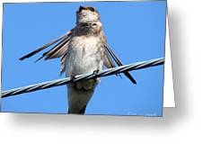 Fluttering Swallow Greeting Card