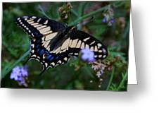 Fly Butterfly Fly Greeting Card