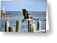 Fly By Greeting Card