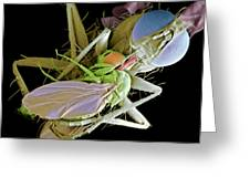 Fly Eating Another Fly, Sem Greeting Card by Volker Steger